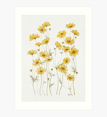 Gelbe Kosmosblumen Kunstdruck