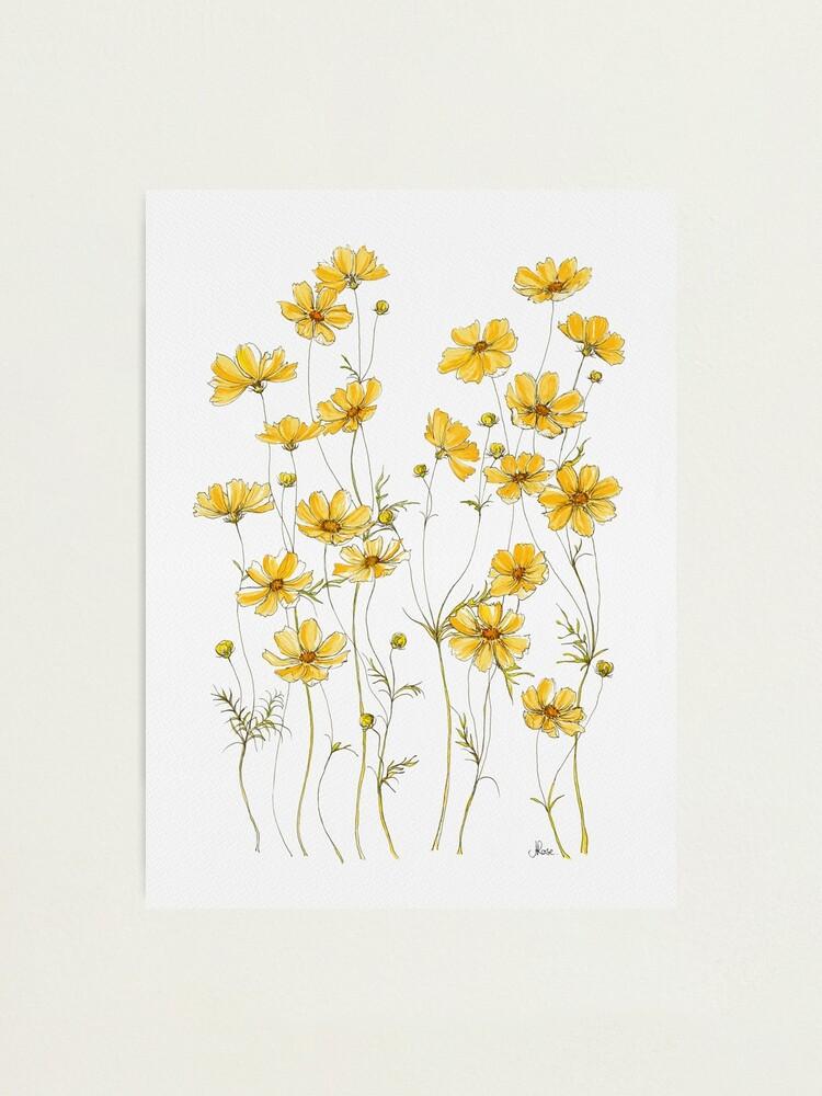 Alternate view of Yellow Cosmos Flowers Photographic Print