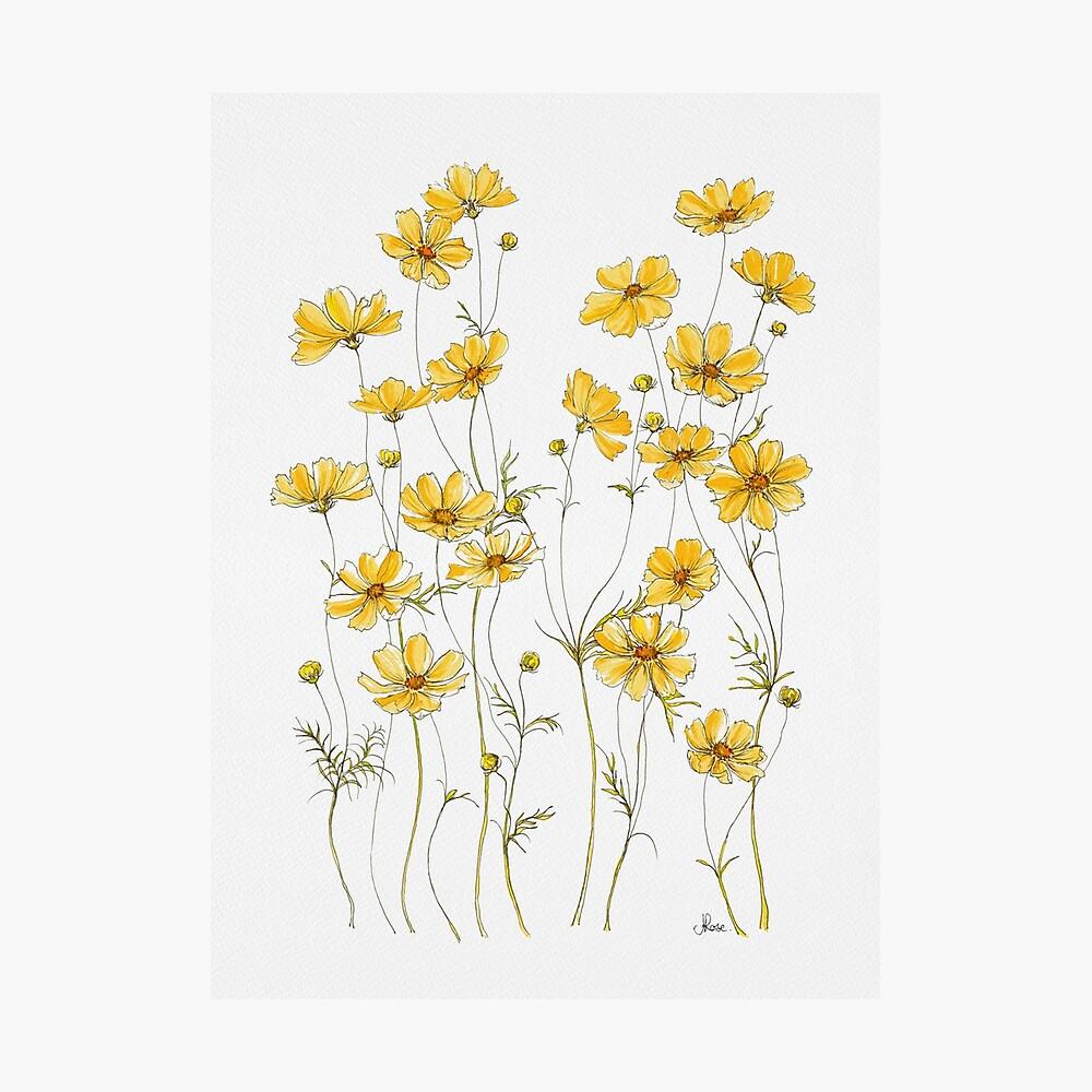 Gelbe Kosmosblumen Fotodruck