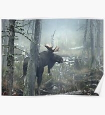 Bull Moose In Morning Mist Poster
