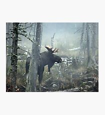Bull Moose In Morning Mist Photographic Print
