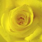*YELLOW ROSE* by Van Coleman