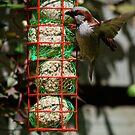 Feeding Time by dougie1
