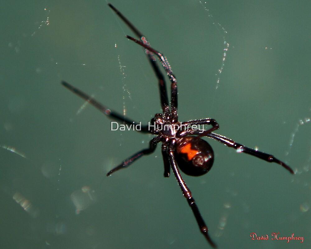 Black Widow by David  Humphrey