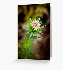 Musk Thistle, Carduus Nutans Greeting Card