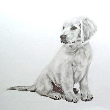 Labrador Puppy - dog by Croftsie