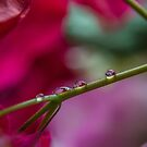 three reflecting drops by michelle meenawong