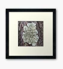 Tree Lichen Framed Print