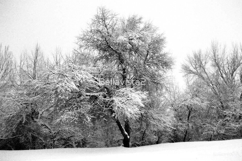 White Winter by Bellavista2