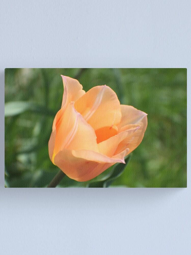 Alternate view of Stretching Into Spring Canvas Print