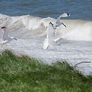 Herring Gulls in Front of a Wave by kernuak