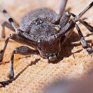 Timberman Beetle by kernuak