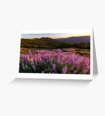 Lupine Fields at Sunset Greeting Card