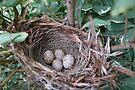 The Nest by Cathy Jones