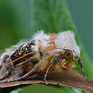 Rain soaked Moth by relayer51