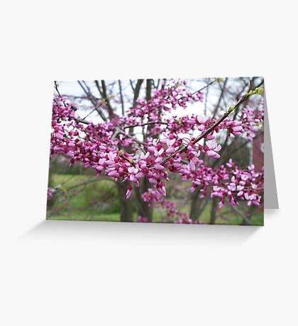 Pinkness and Purpleness Greeting Card