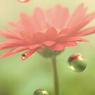 Red Daisy Bubbles by MDossat