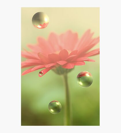Red Daisy Bubbles Photographic Print
