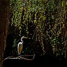 Bird in Paradise by milton ginos