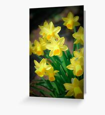 Spring flowers - narcissus Greeting Card