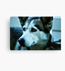 Blue Eyes Dog Canvas Print