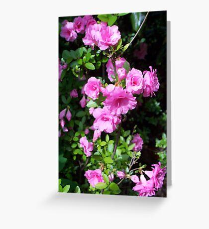 Spring Pinks - Azalea Greeting Card