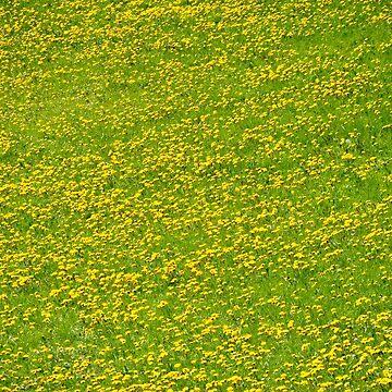 See of dandelion by KlickKlickFoto