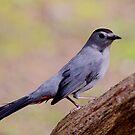 Catbird by Enola Wagner
