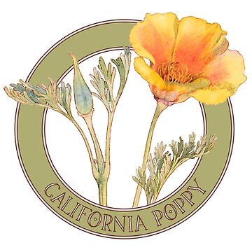 California Poppy by codyjoseph