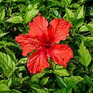 Red and Green  by Lanis Rossi