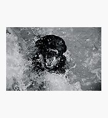 Chocolate Lab Photographic Print