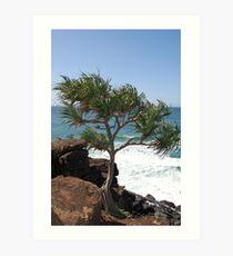 Pandanus Tree, Tweed Heads Art Print