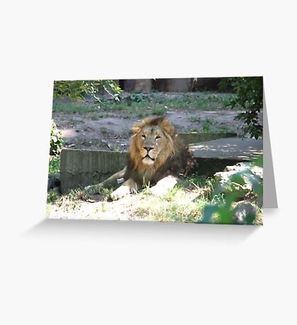 Lazy Times Greeting Card