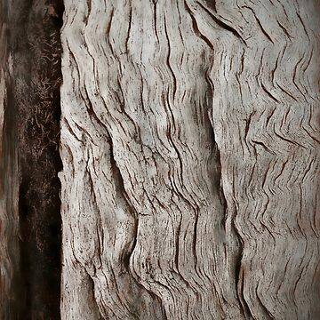 Red Gum by JPPhotographix