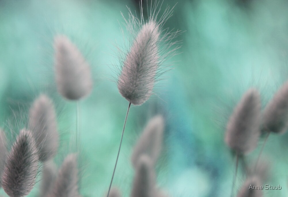 Nature's softness by Anne Staub