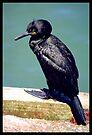 Unknown Bird by Kerensa Davies