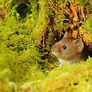 Vole In The Hole by CBoyle
