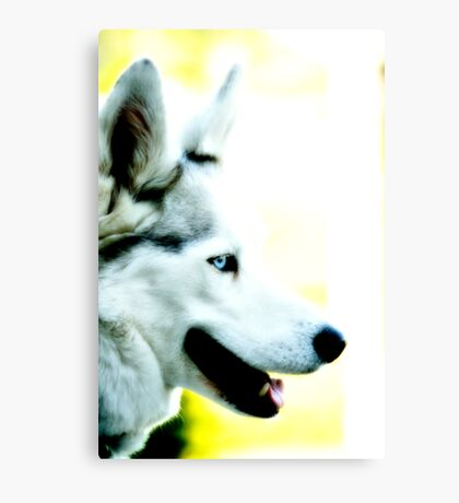 White husky blue eye Canvas Print