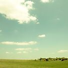 I think that white bird must like cows... it's always there when i drive by by Jenny Miller