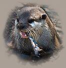 Asian Short Clawed Otter (Aonyx cinerea) by Foxfire
