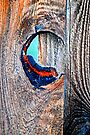 Through The Knothole by Bob Wall