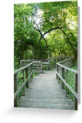 The Path I've Chosen by Veronica Schultz