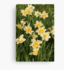 Nature, Flowers, Daffodil, Photography, BebiCervin Canvas Print