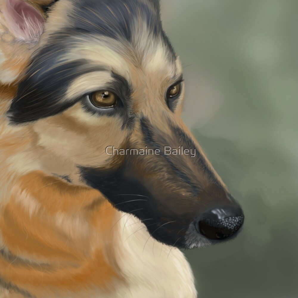 German Shepherd by Charmaine Bailey