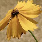 Wild Yellow Flower by Fern Design