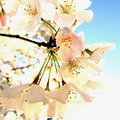 Cherry Blossom Angels 3285 by Candy Paull
