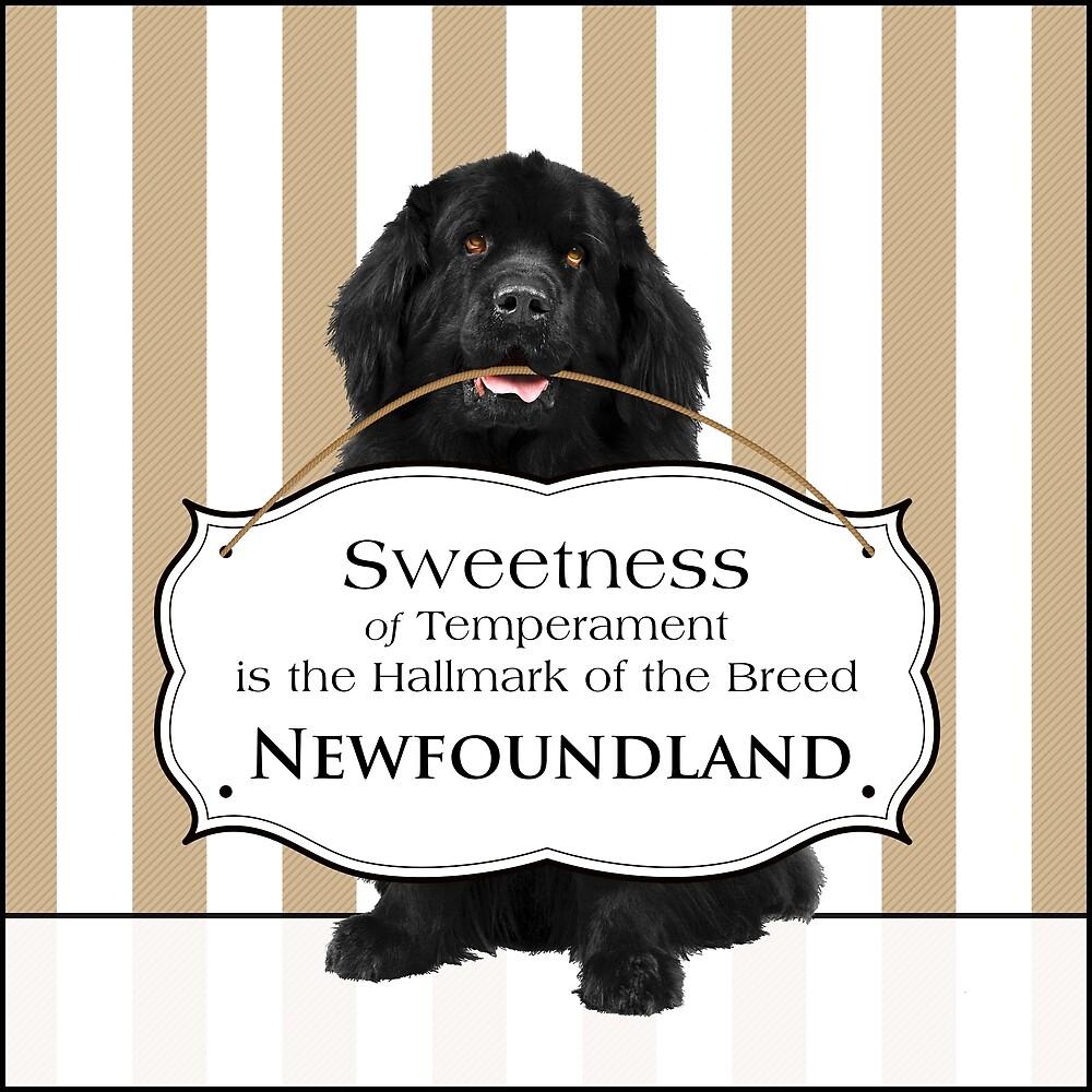 Sweetness of Temperament - Black Newfie by Christine Mullis
