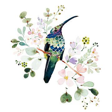 Humming bird Violetear in Summer by jjsgarden