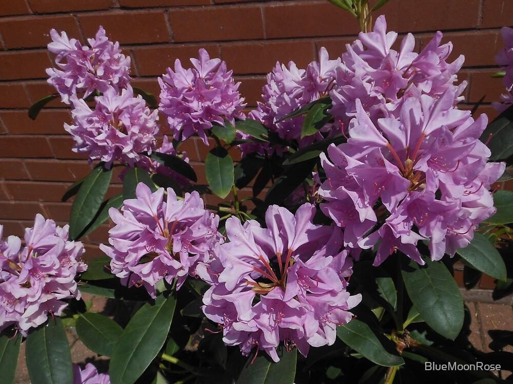 Rhododendron genießt den Sonnenschein von BlueMoonRose