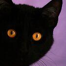 Bright Eye  by Susanne Correa